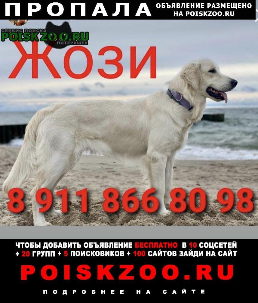 Пропала собака Зеленоградск