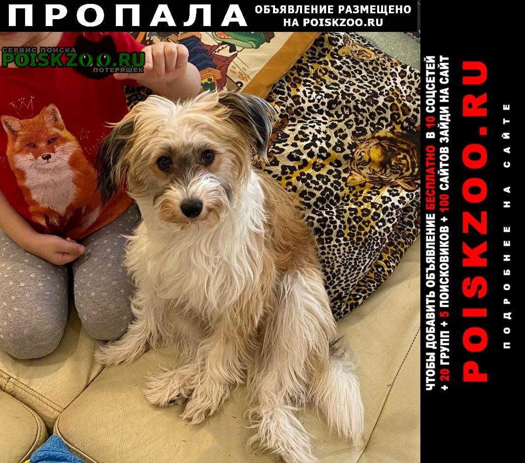Камышлов Пропала собака 10 мес, кличка герда