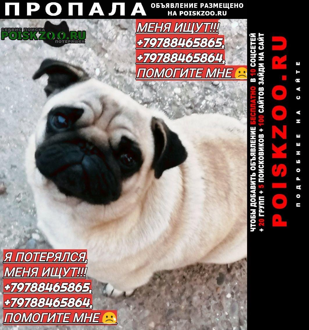 Красногвардейское Пропала собака (украли) домашний любимец