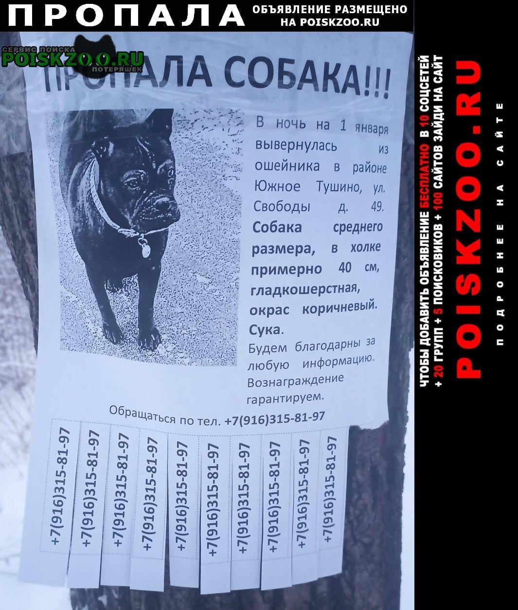 Москва Пропала собака собачка.