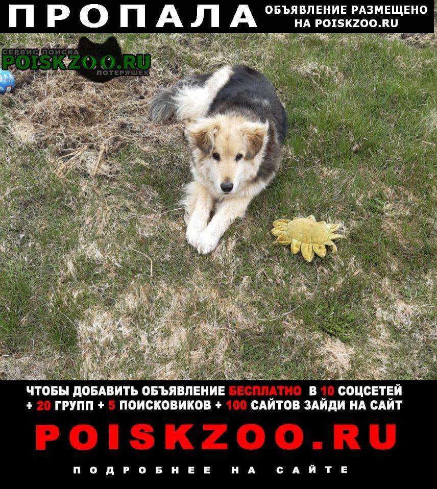 Гатчина Пропала собака пёс