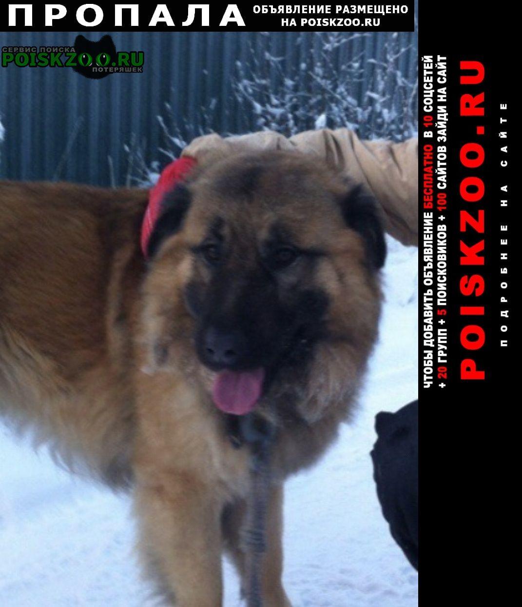 Пропала собака Луга
