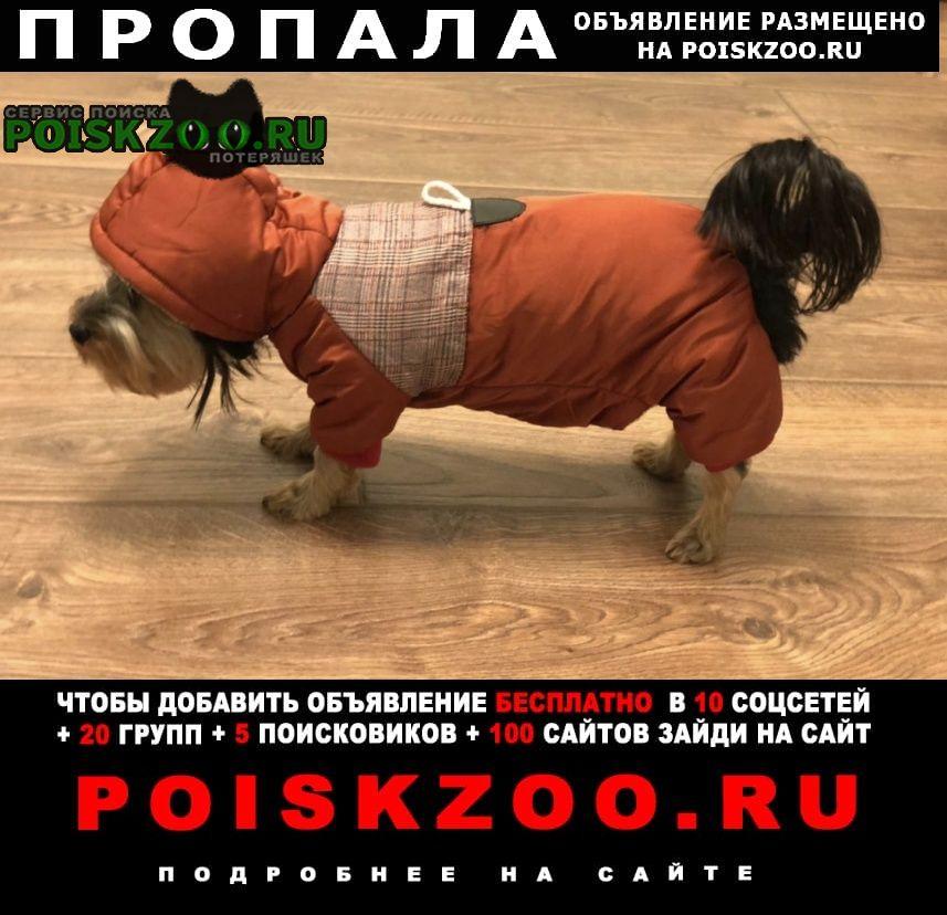Подольск Пропала собака девочка асти