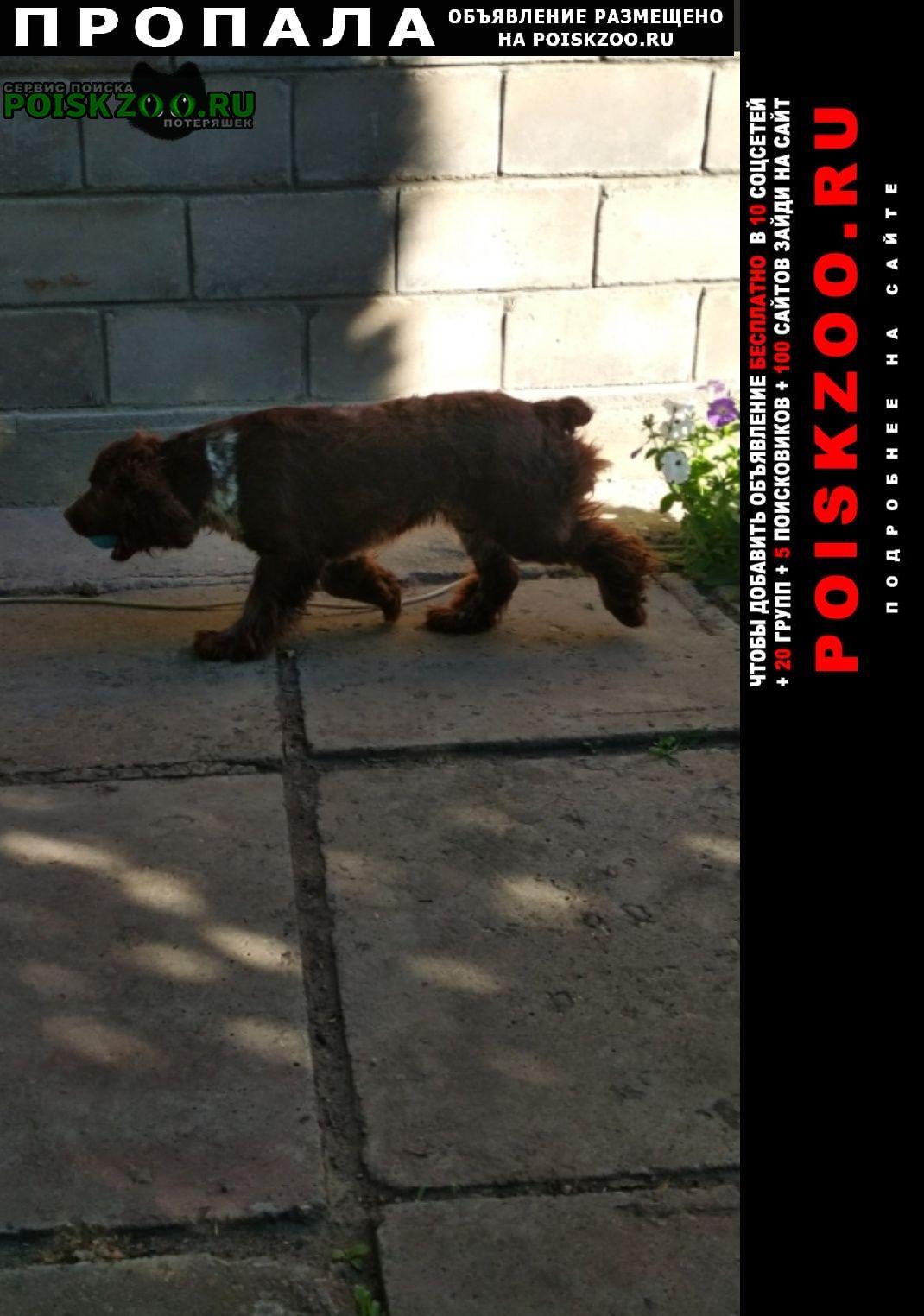 Пропала собака спаниель Пятигорск