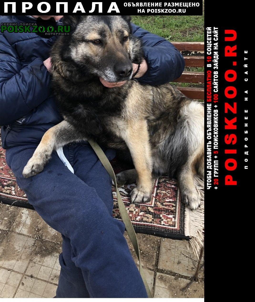 Пропала собака Нарофоминск