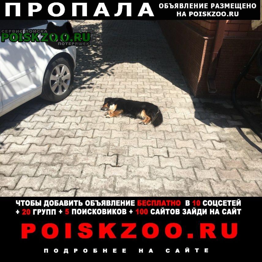 Пропала собака Ессентуки