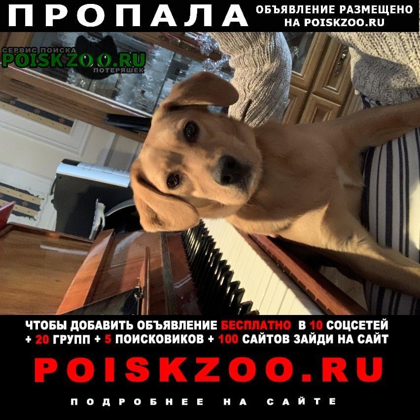 Пропала собака бейли Москва