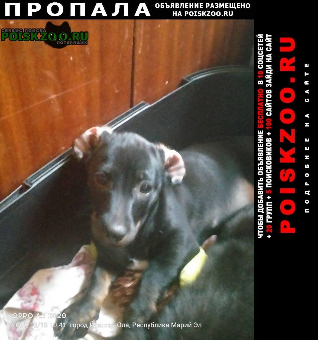 Пропала собака..убежала Йошкар-Ола