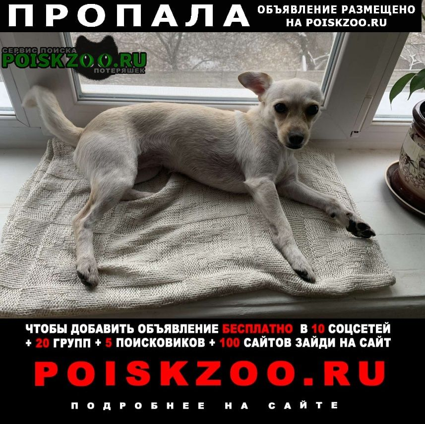 Пропала собака Кременчуг