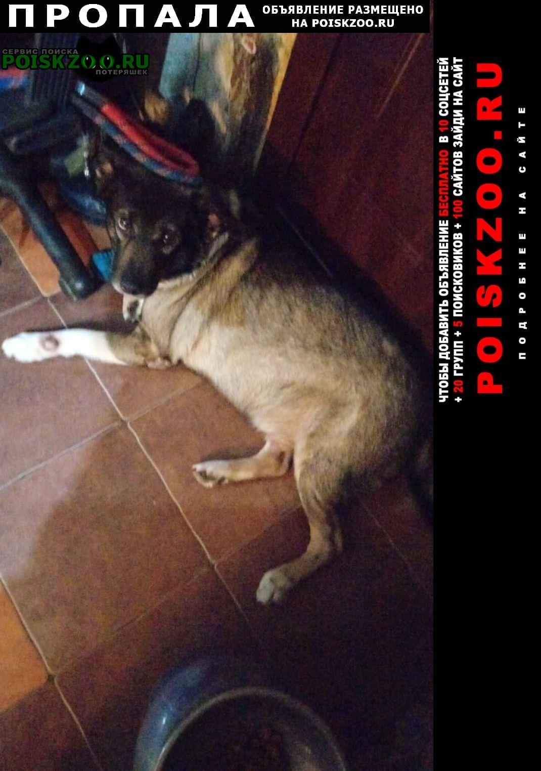 Пропала собака Комсомольск-на-Амуре