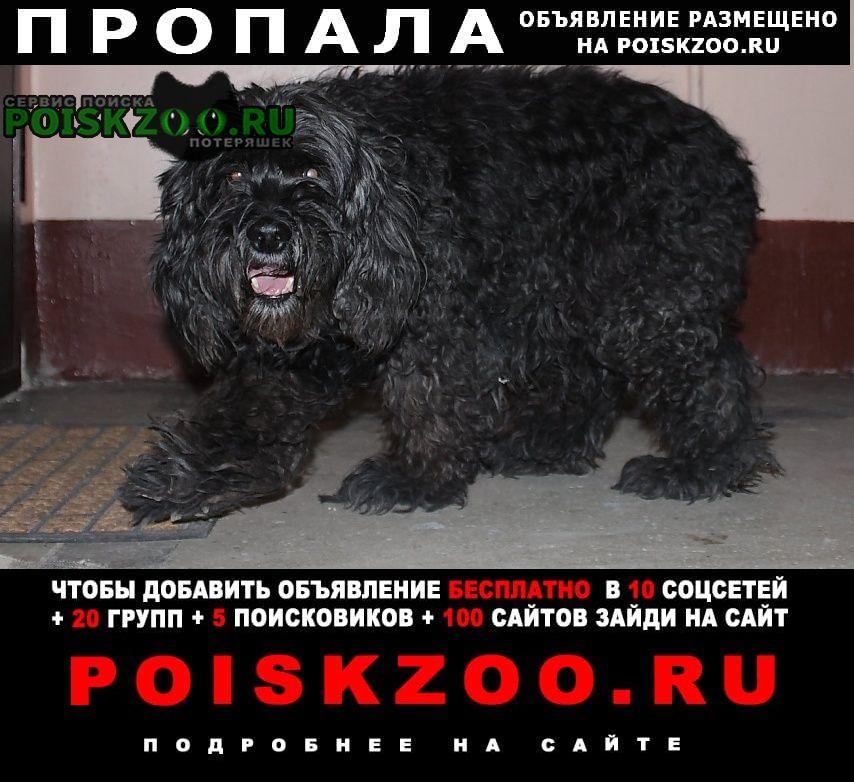 Краснодар Пропала собака черный кучерявый кокер спаниель