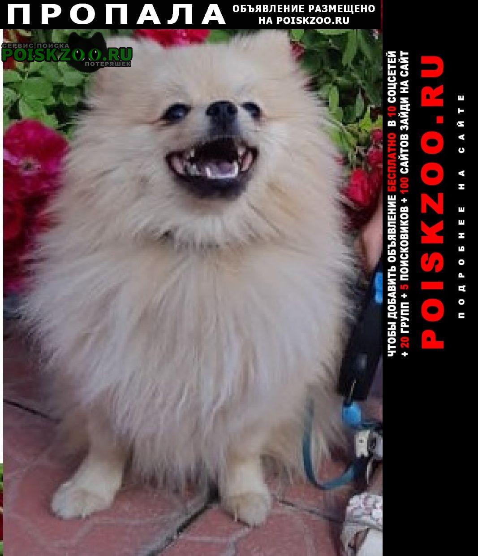 Пропала собака в районе 58 школы Пенза