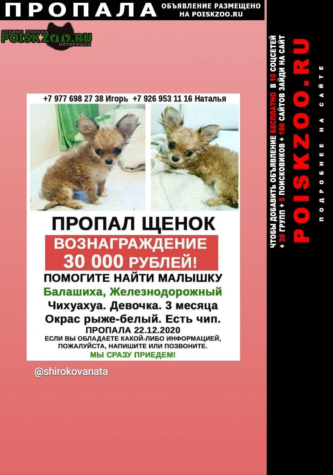 Пропала собака щенок чихуахуа Балашиха
