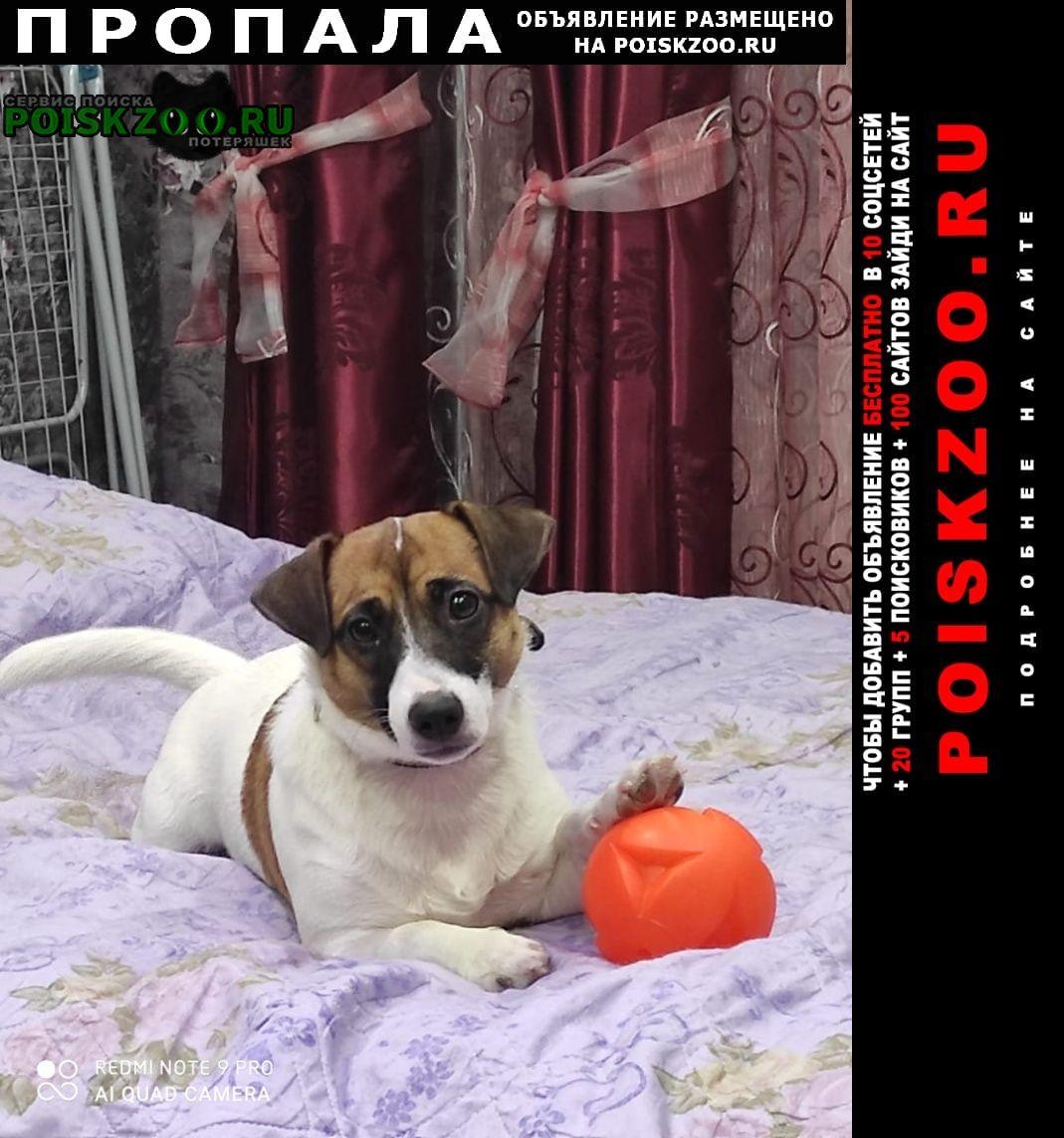 Пропала собака Осинники