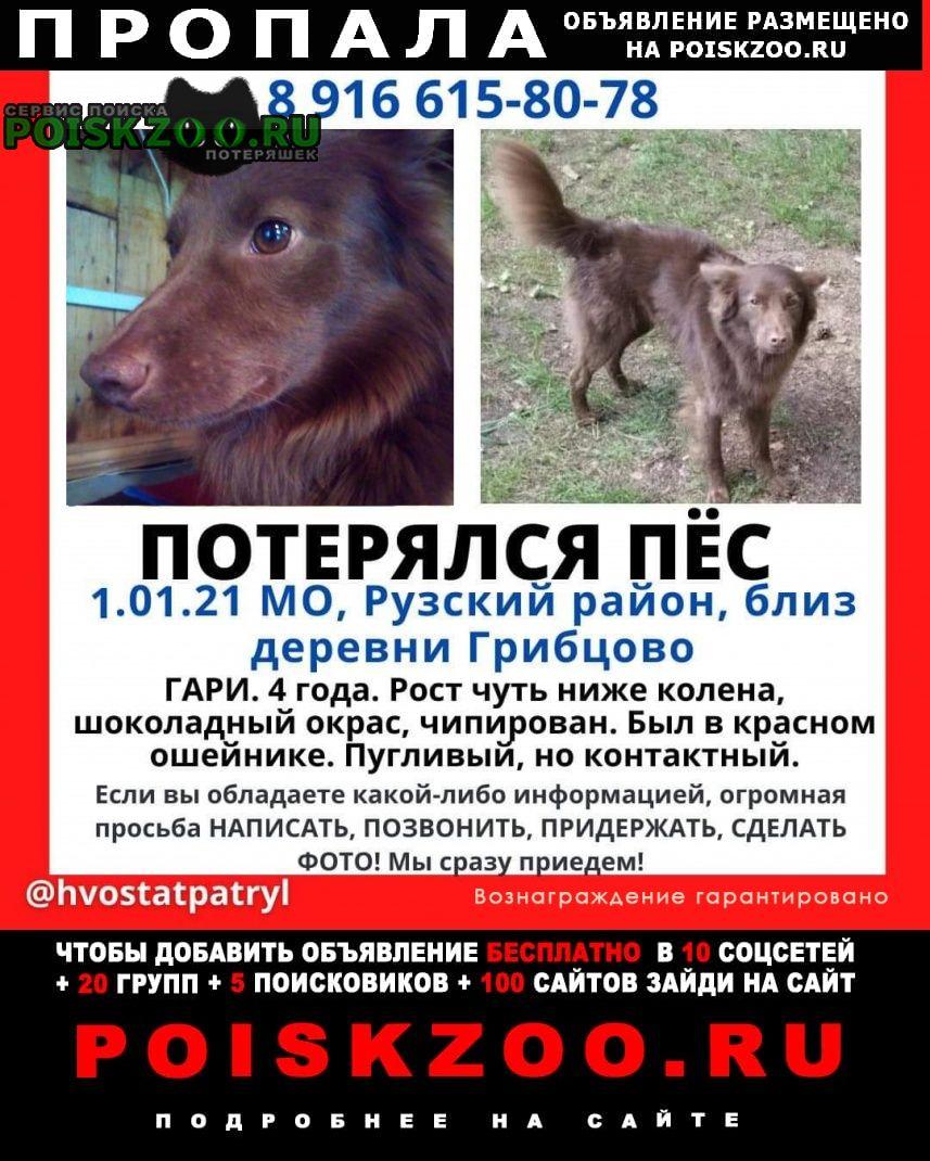 Дорохово Пропала собака