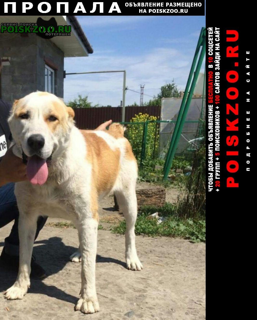 Пропала собака девочка азиатка Брянск