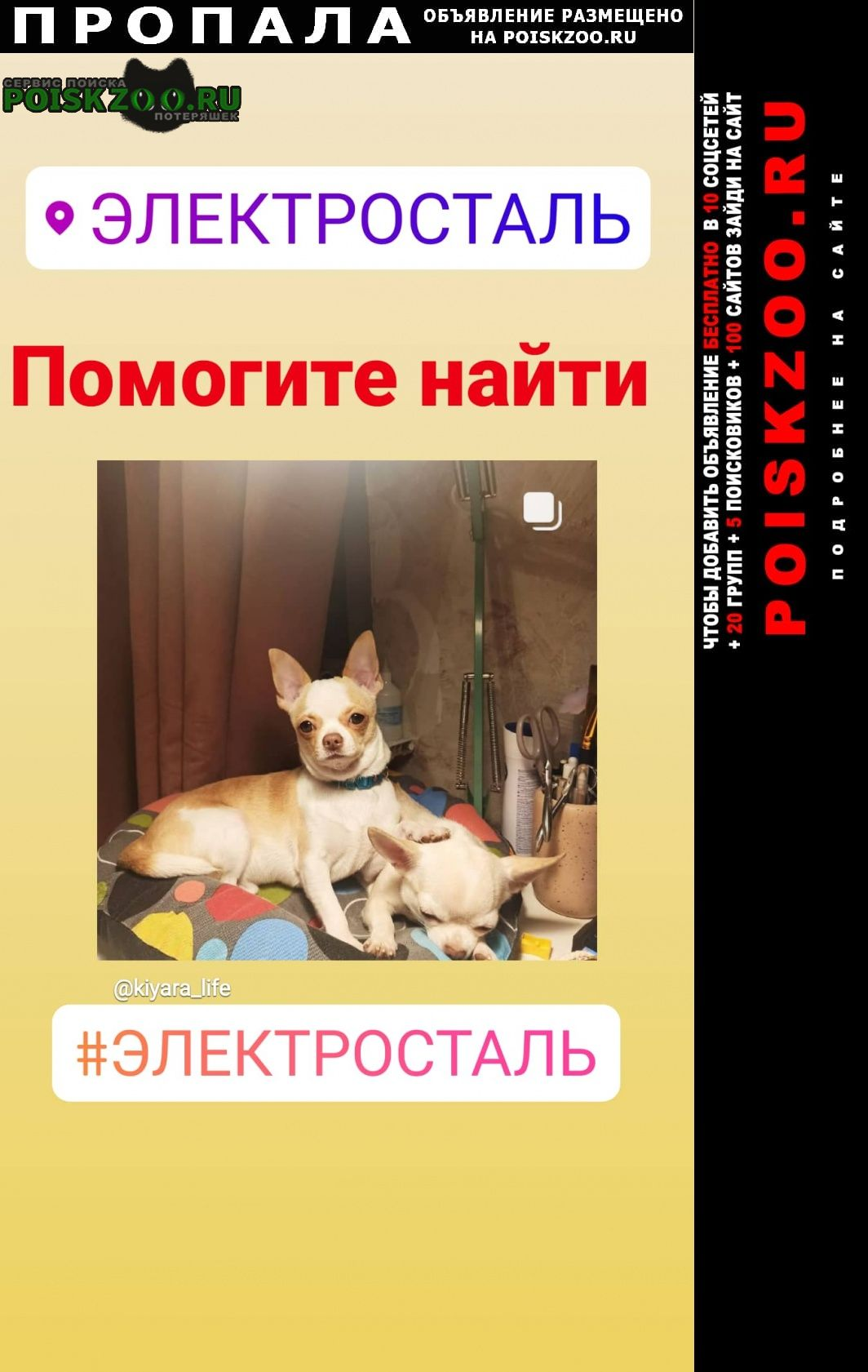 Пропала собака Электросталь