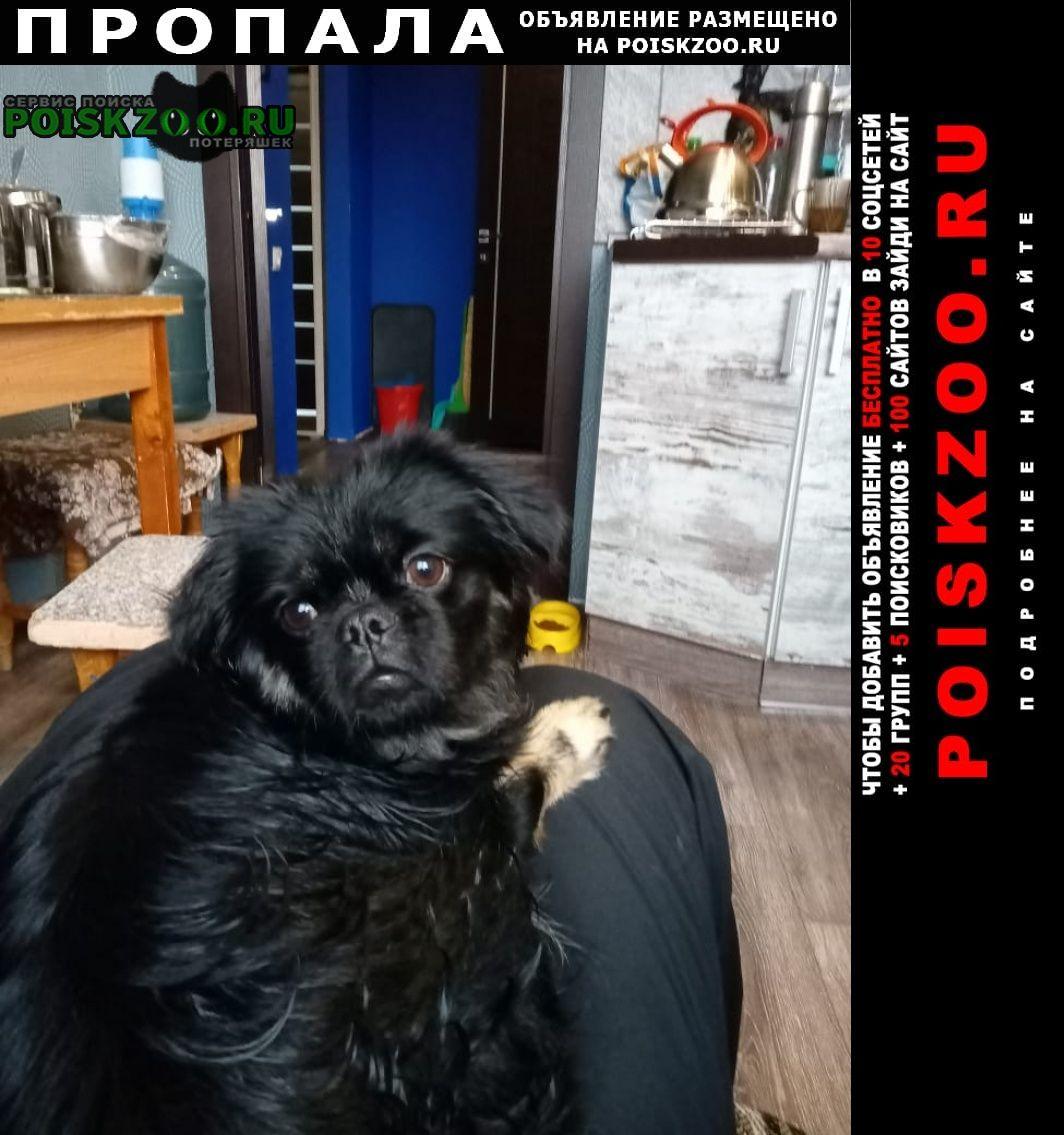 Пропала собака черный с подпалинами пекинес Новошахтинск