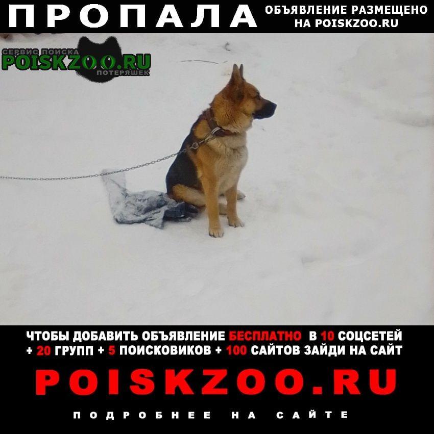 Пропала собака. Нижний Новгород