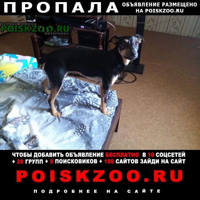 Пропала собака пожалуйста помогите найти Волгодонск