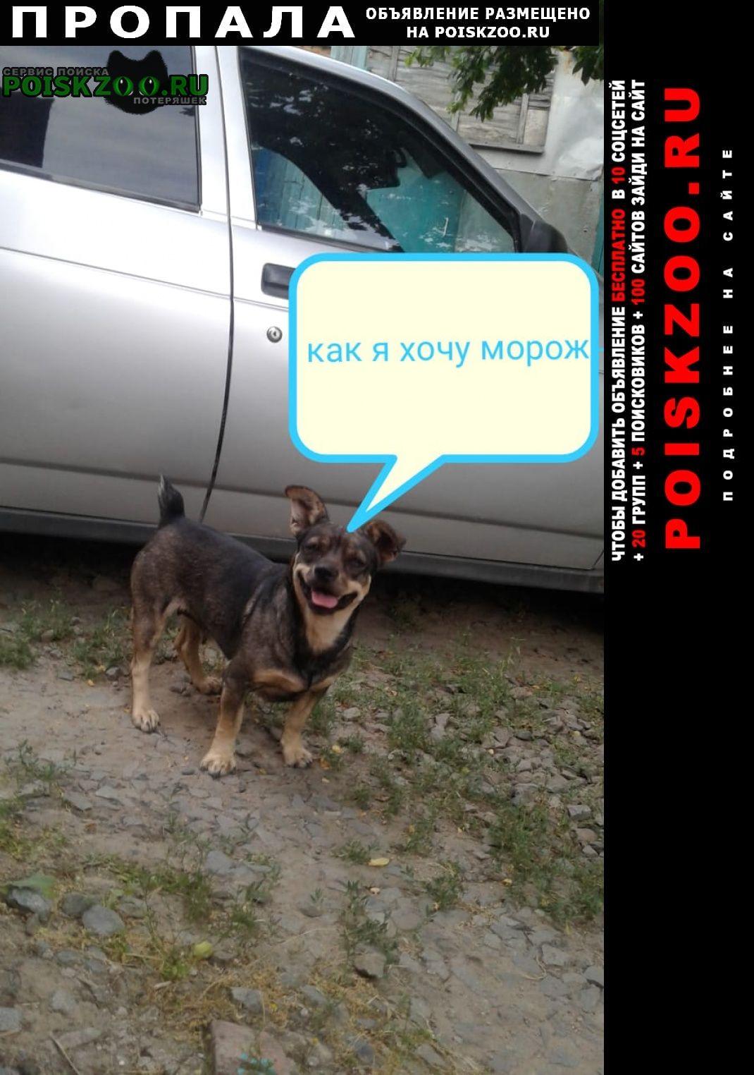 Пропала собака помогите найти члена семьи, кличка маш Азов