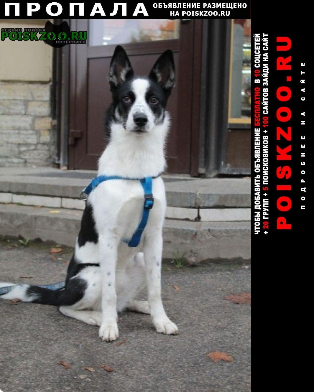 Пропала собака марта Санкт-Петербург