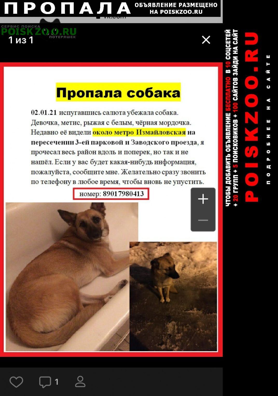 Москва Пропала собака помогите найти собаку