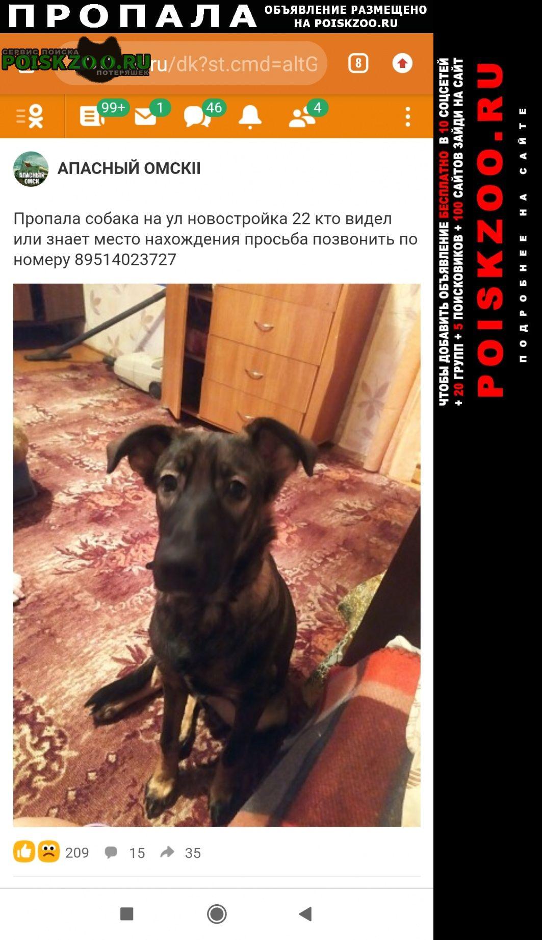 Омск Пропала собака