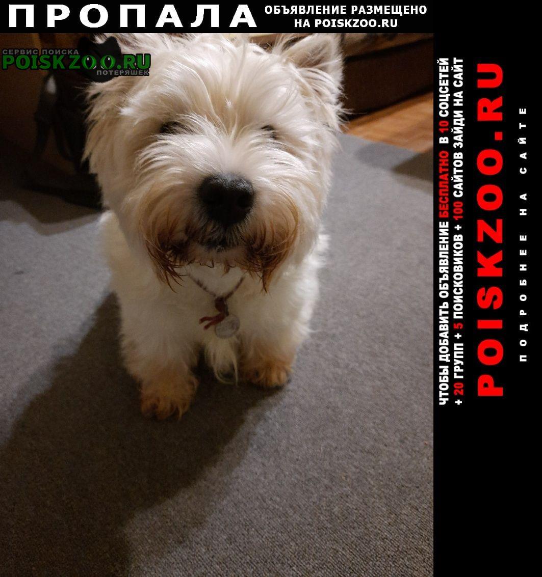 Вологда Пропала собака возле марфино