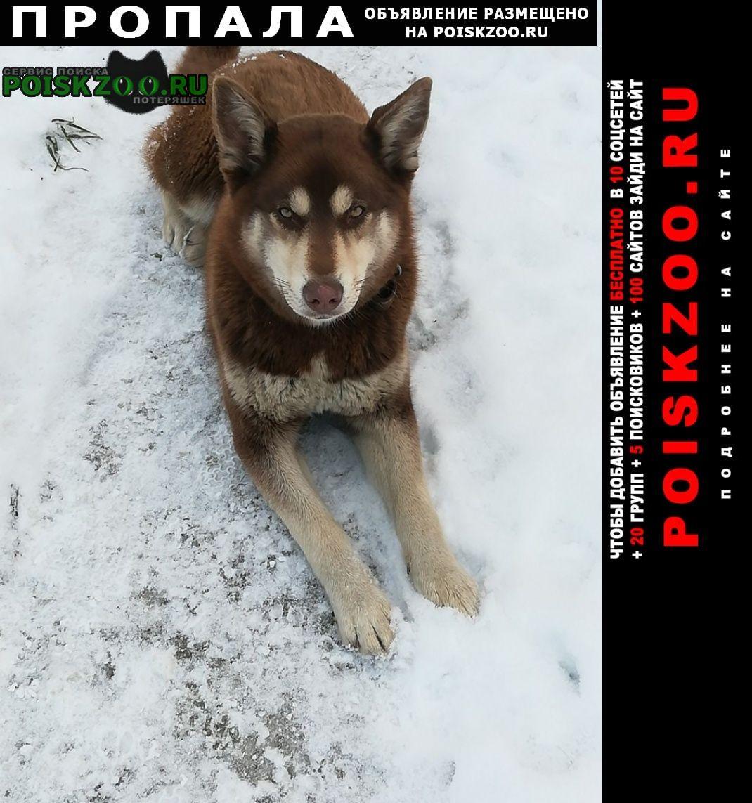 Пропала собака Киржач