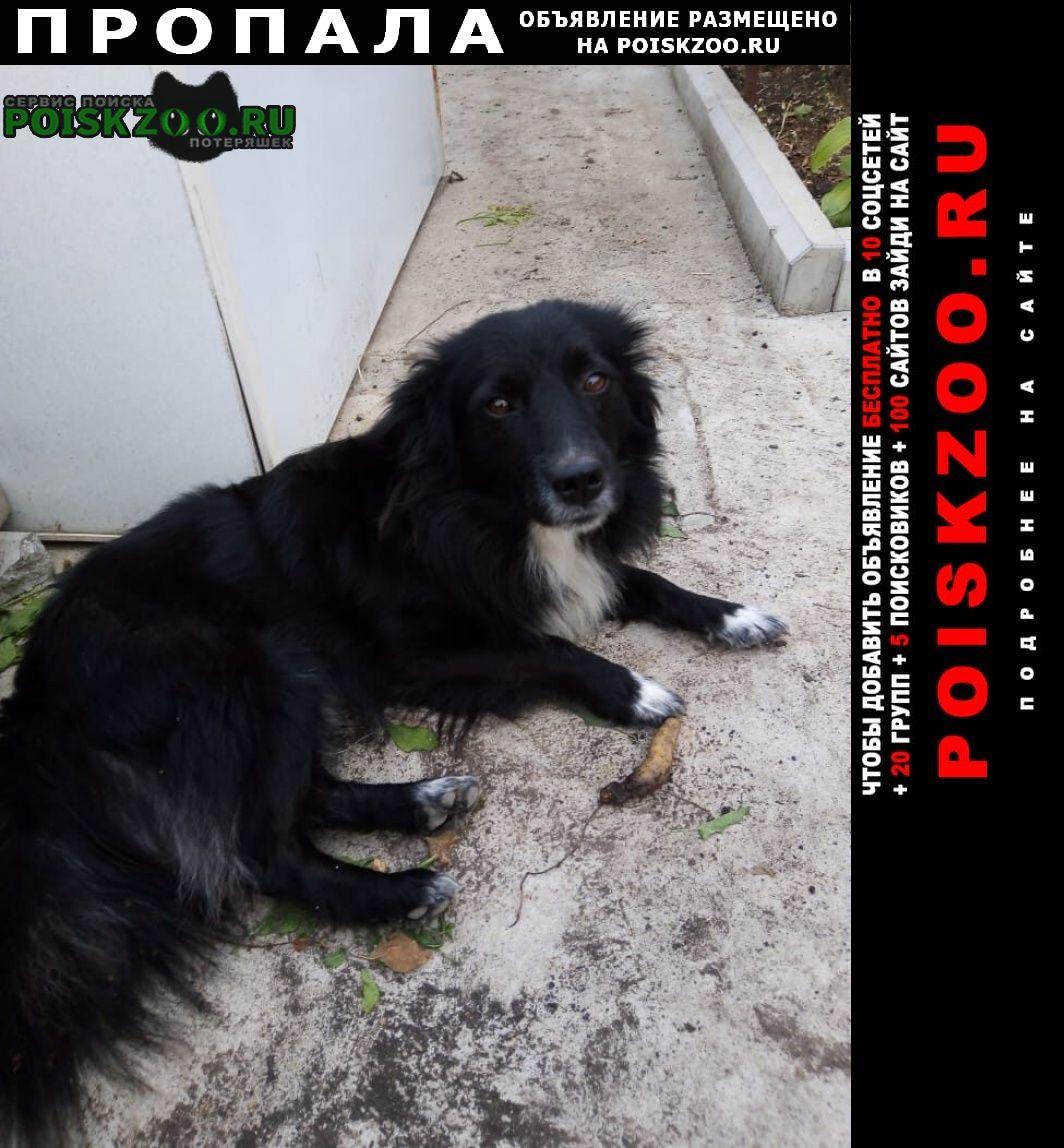Пропала собака Армавир
