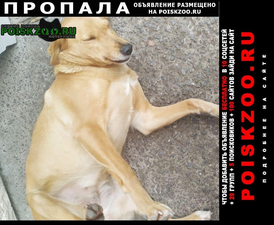 Пропала собака рыжая в ростове-на-дону Ростов-на-Дону