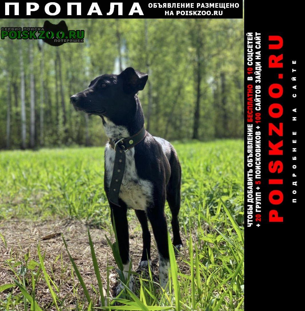 Пропала собака нарофоминский район д. воскресенки Верея