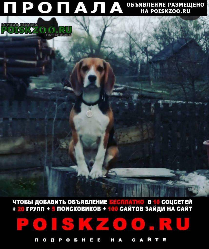 Пропала собака Сызрань