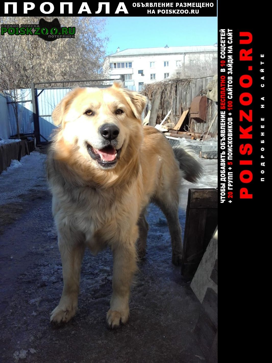 Пропала собака.. Шадринск