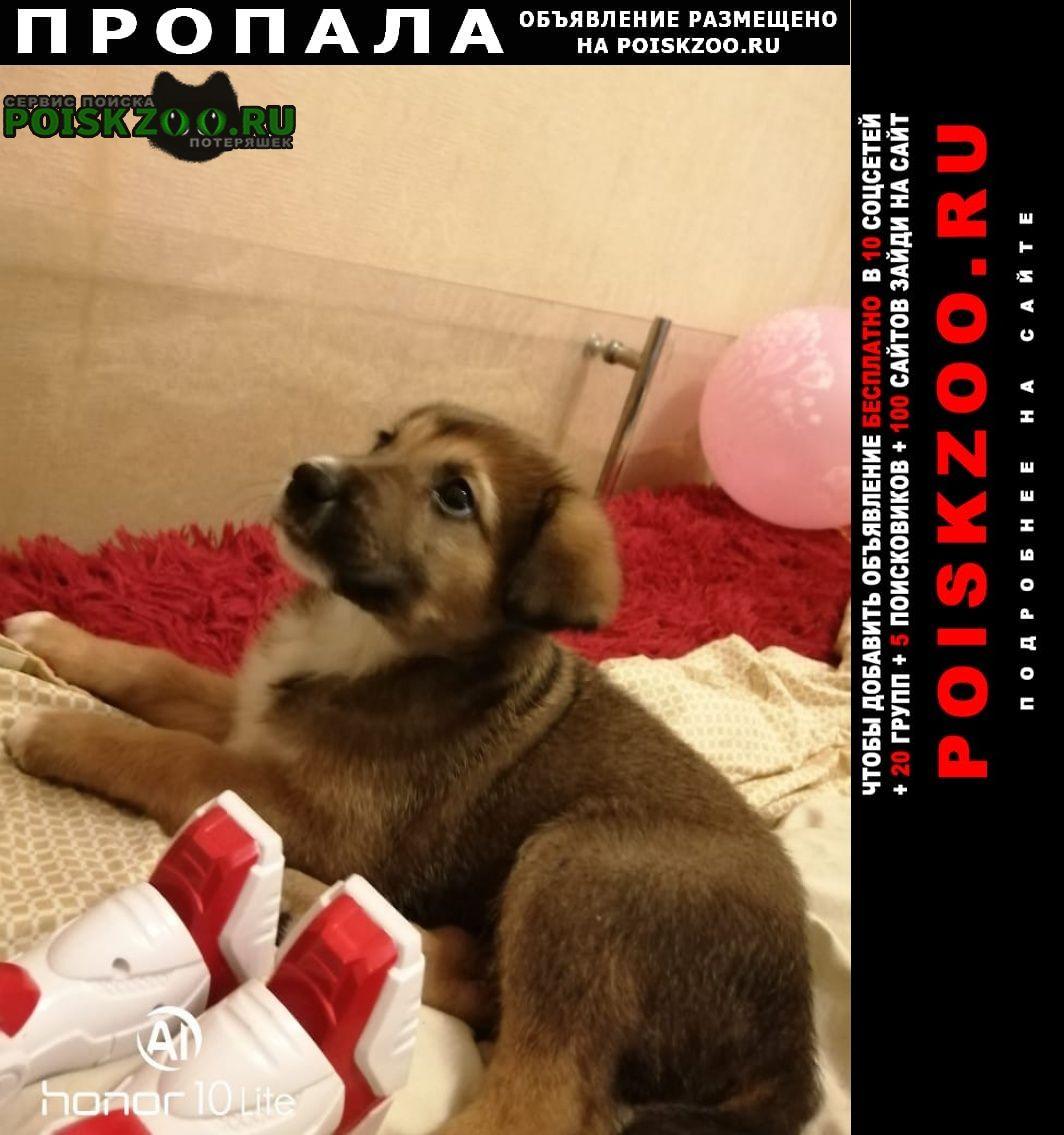 Пропала собака девочка 1, 5 месяца Москва