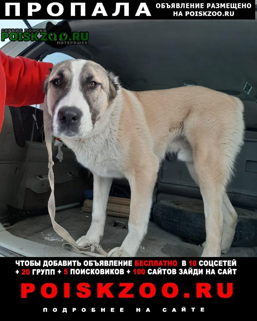 Пропала собака южный Кемерово