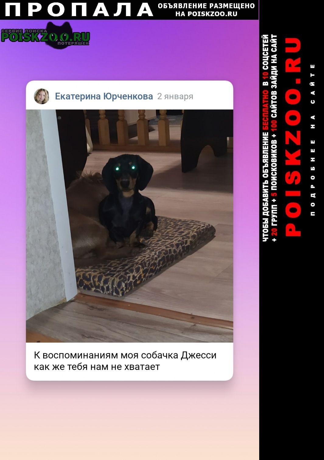 Пропала собака собачка породы такса, зовут джес Москва