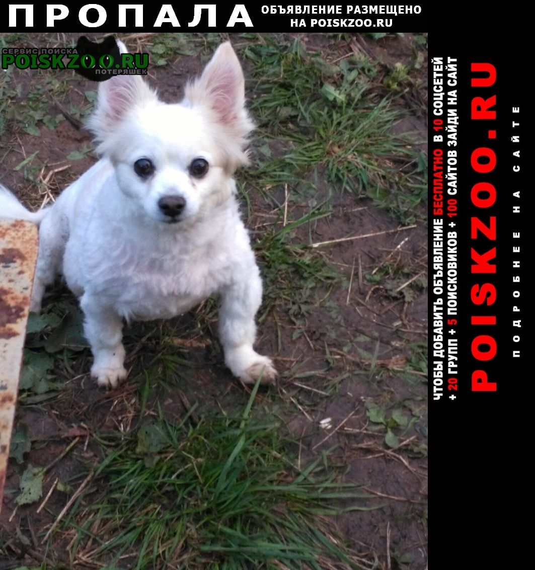 Нижнекамск Пропала собака