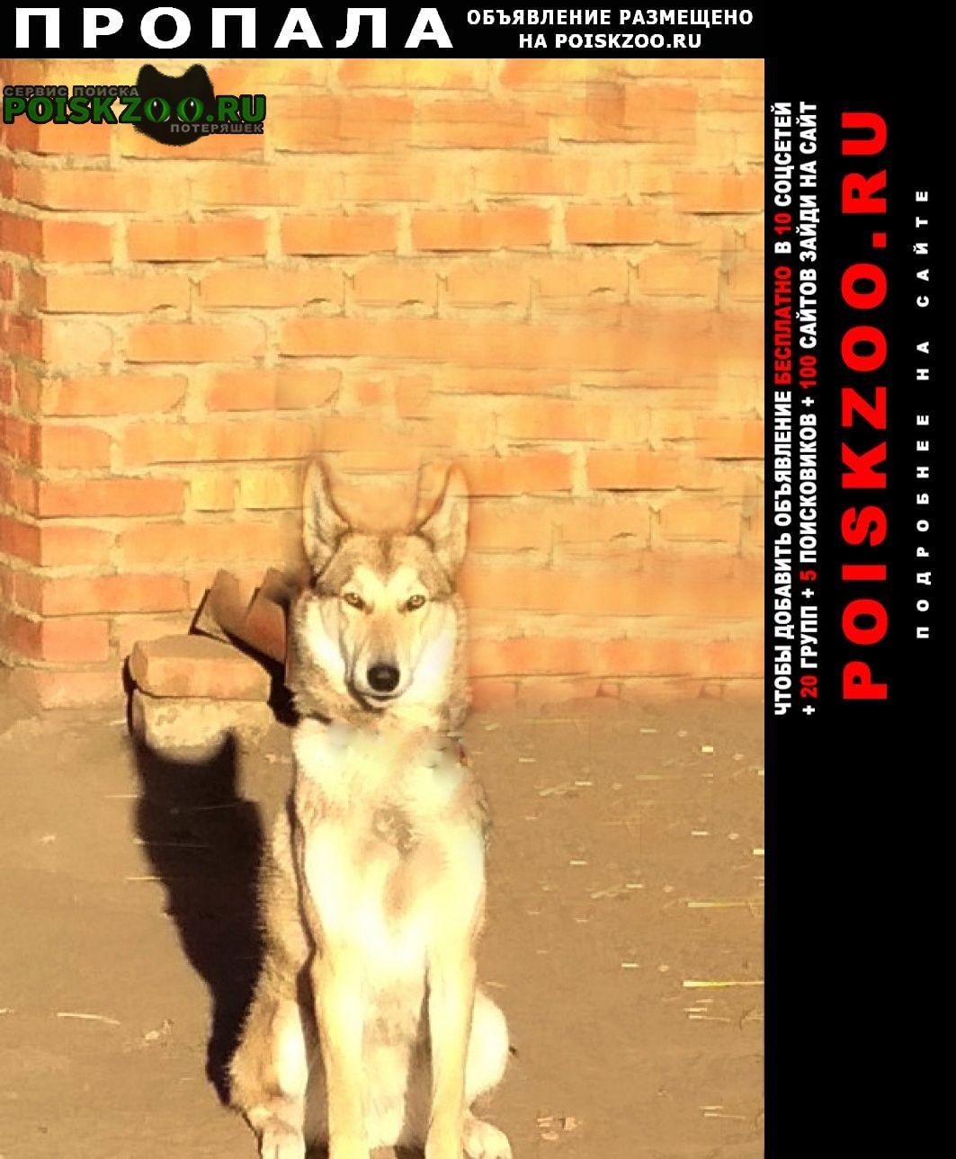 Пропала собака Урюпинск