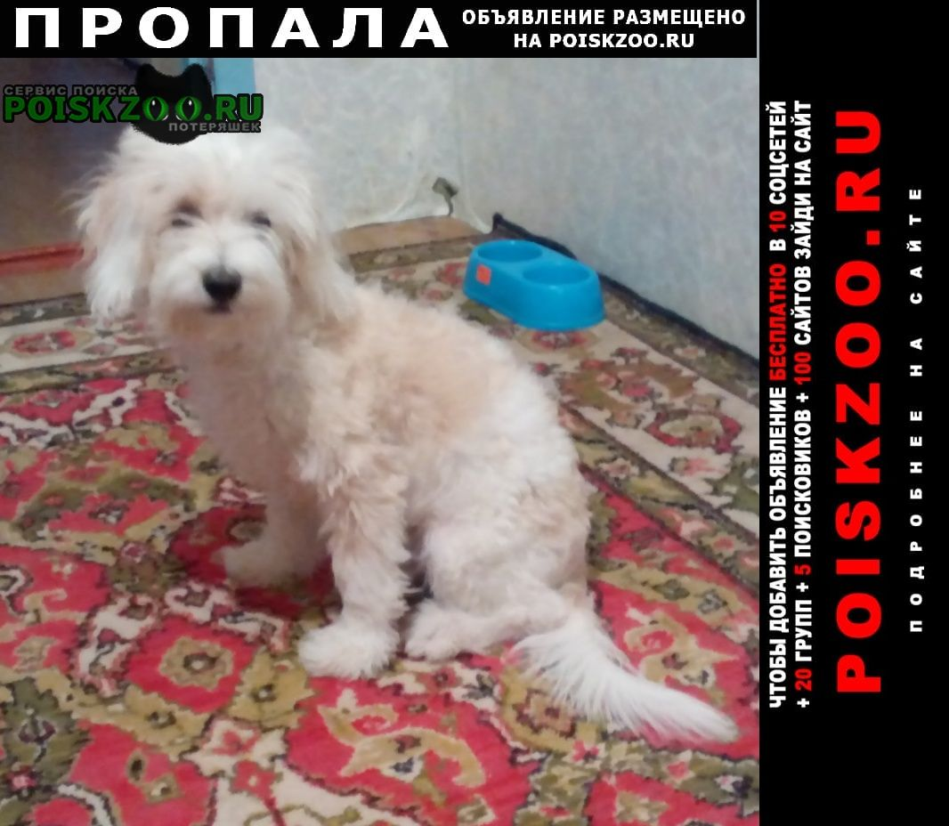 Пропала собака кличка бим Городище (Волгоградская обл.)