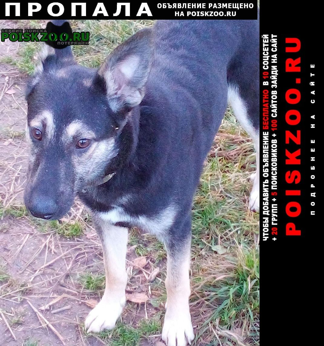Иваново Пропала собака помогите найти