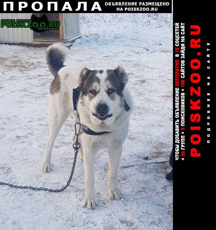 Пропала собака помагите найти друга Верхнеуральск