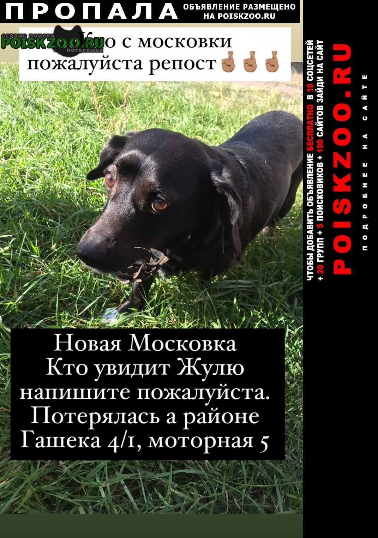 Пропала собака срочнннооооо Омск