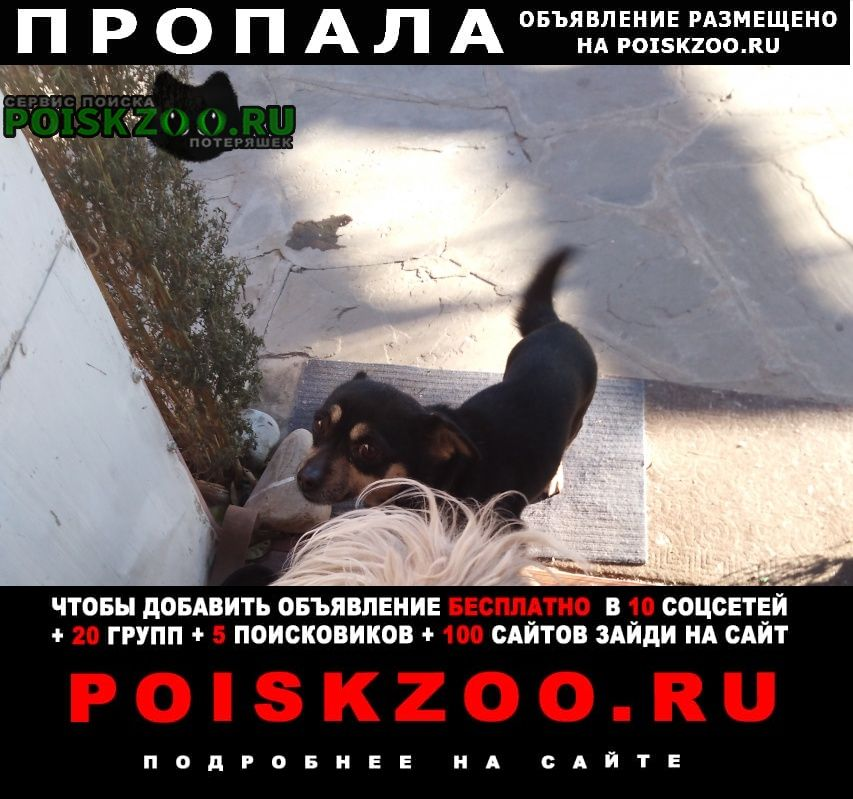 Пропала собака 5 января 2020 Новочеркасск