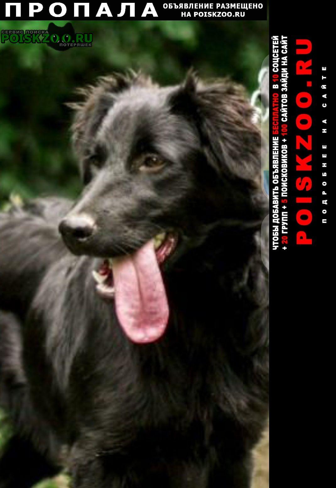Пропала собака Малоярославец