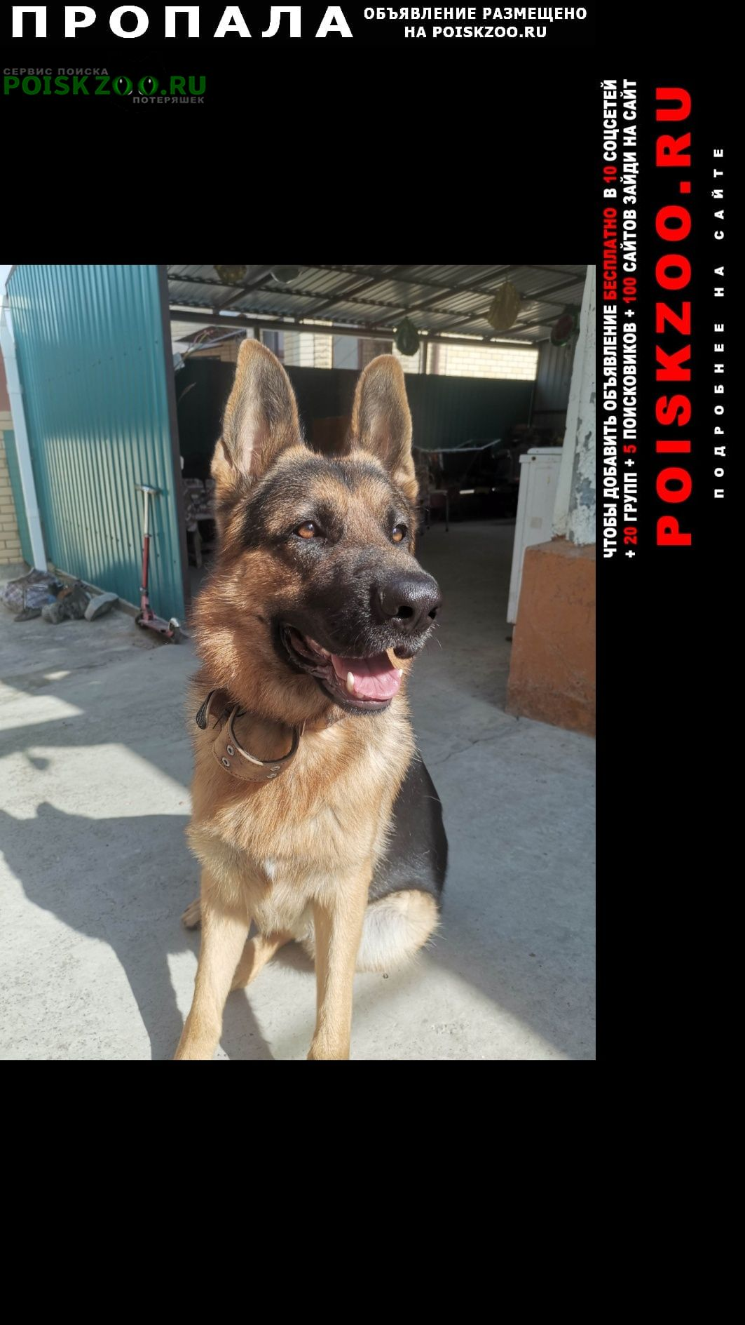 Пропала собака пес. немецкая овчарка. Анапа