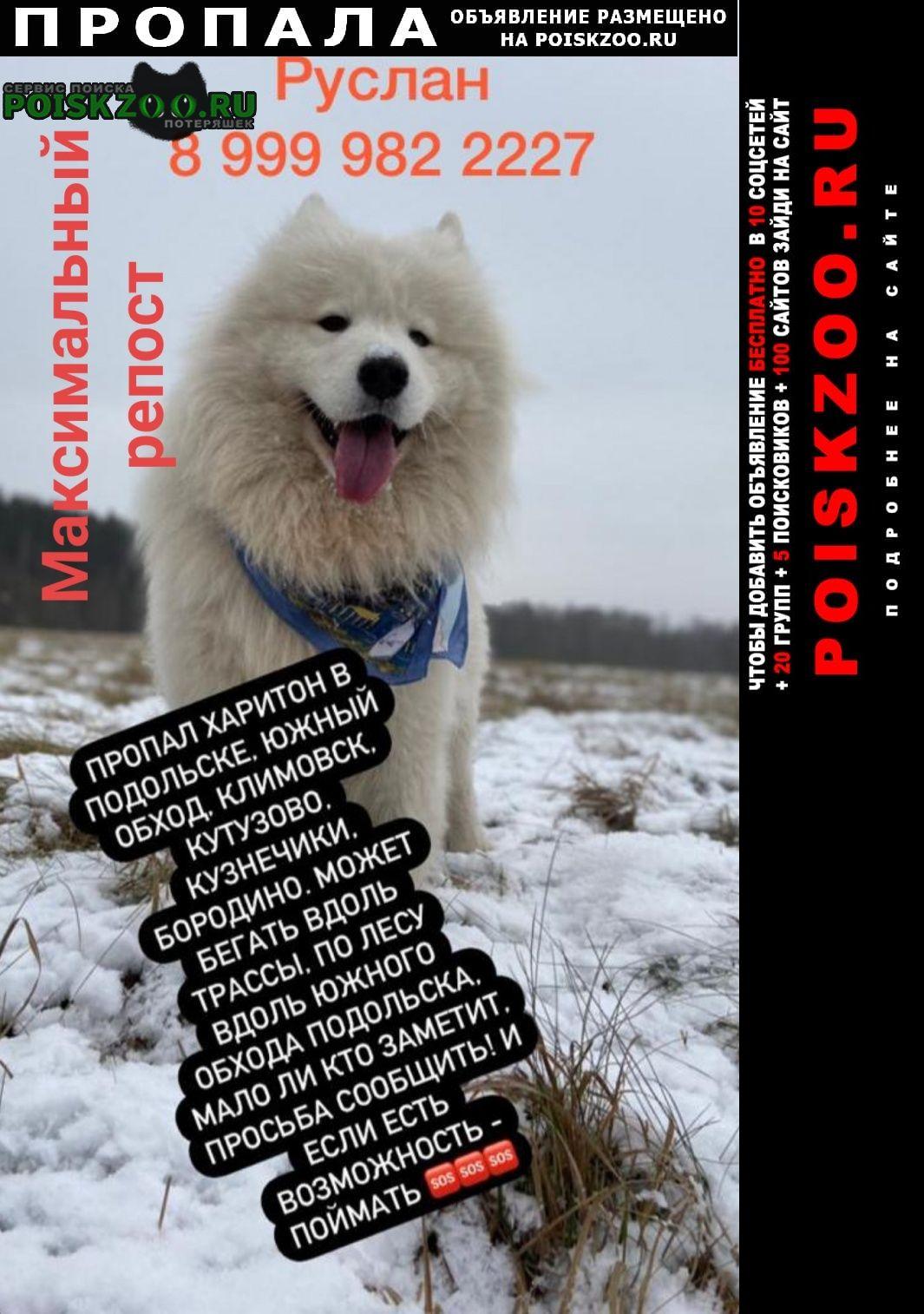 Пропала собака самоед Подольск