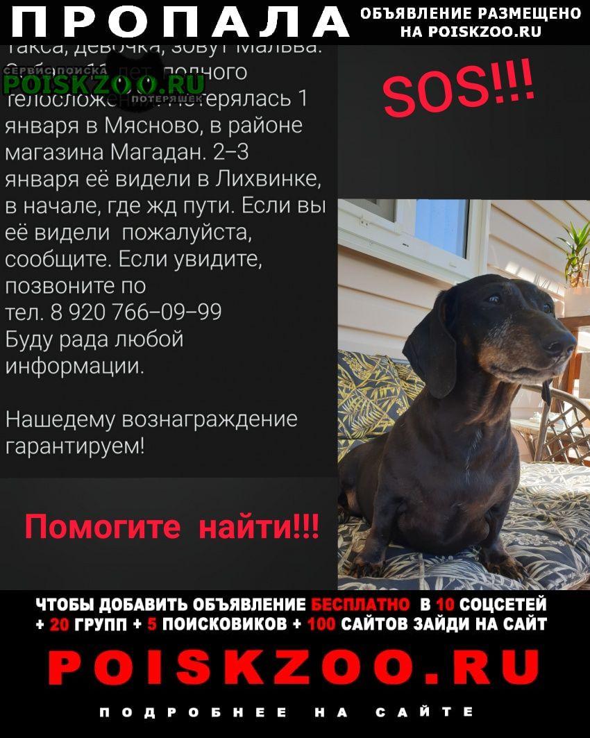 Тула Пропала собака такса