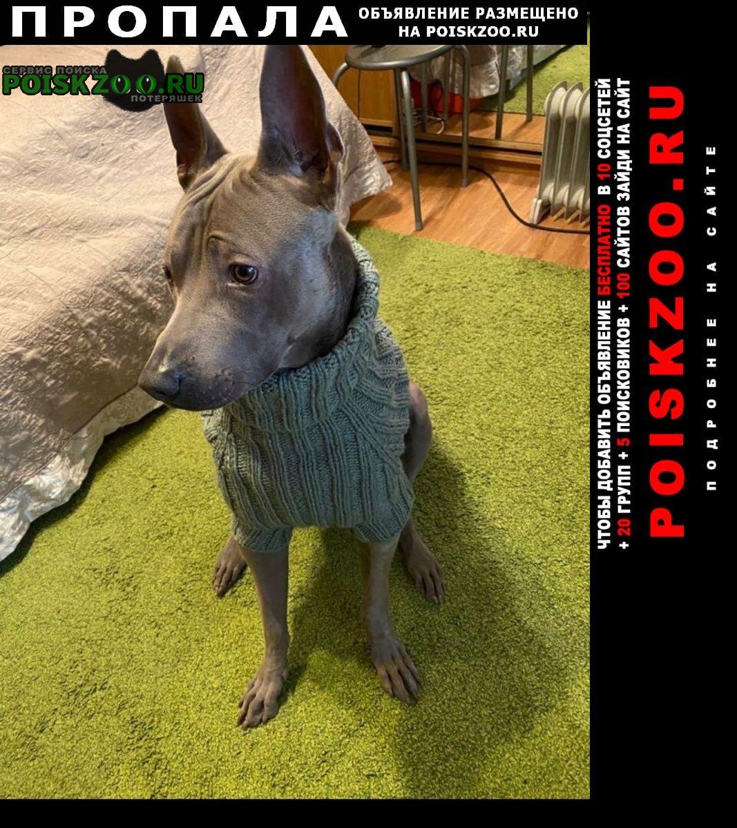 Москва Пропала собака